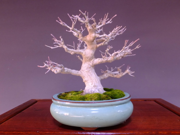 Export Bonsai